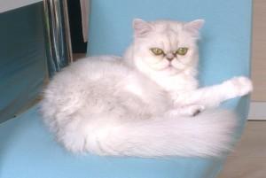Alice na stolici
