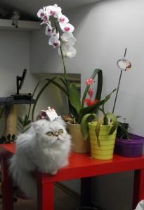 Alice sa orhidejom
